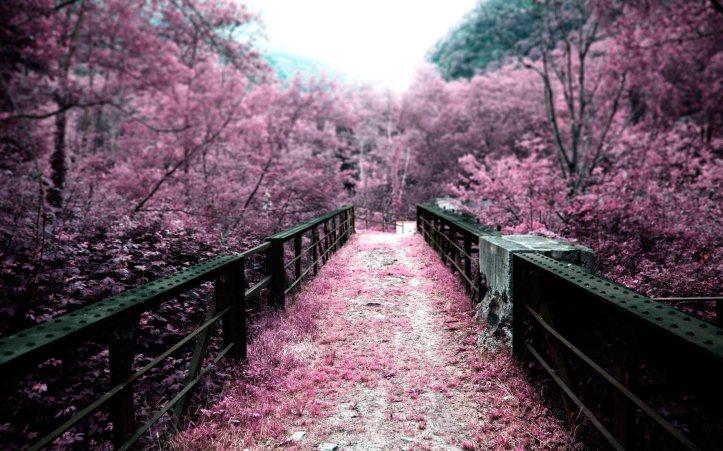 Sakura vrt